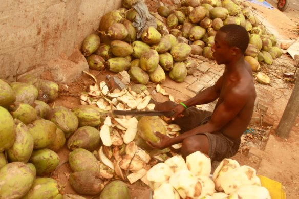 COCONUT WATA FEVA - photo by ACCRA [dot] ALT